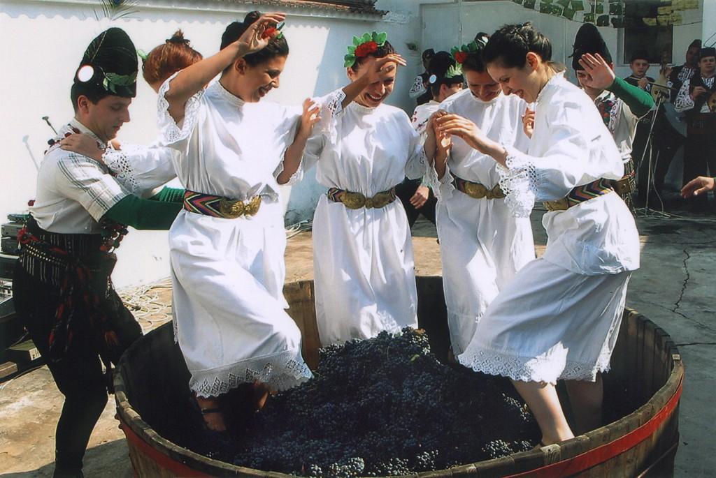 Vin et traditions Vinifera 06